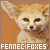 Foxes: Fennec